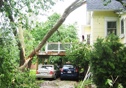 Legyen szó túlméretes, túlnőtt vagy éppen veszélyes fáról, előttünk nincs lehetetlen. Beépített területen, vezetékekre veszélyt jelentő fát kivágják, visszavágjuk akár darusautó alkalmazásával, vagy alpintechnikával. Zöldhulladékot elszállítjuk.